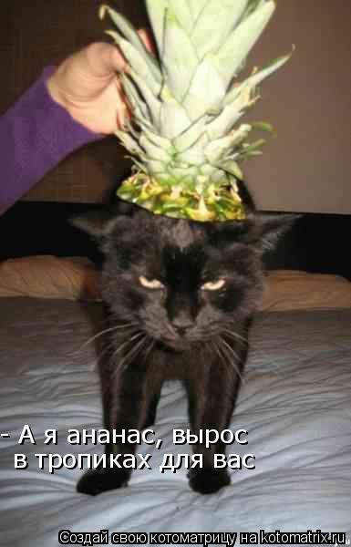 Котоматрица: - А я ананас, вырос  в тропиках для вас