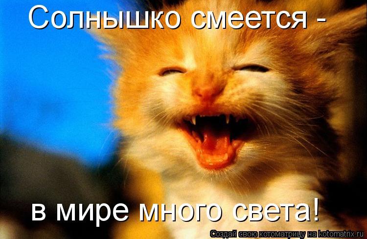 Котоматрица: Солнышко смеется - в мире много света!