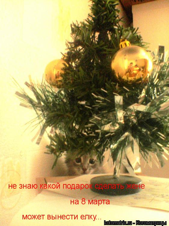 Котоматрица: может вынести елку... не знаю какой подарок сделать жене  на 8 марта