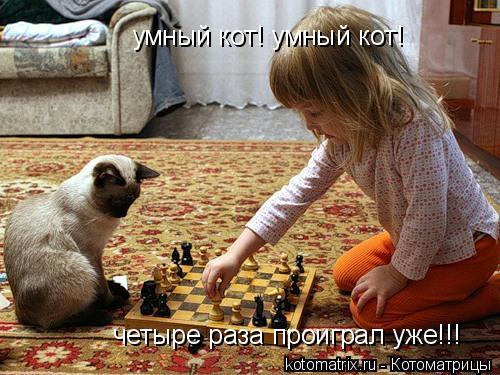 Котоматрица: умный кот! умный кот! четыре раза проиграл уже!!!