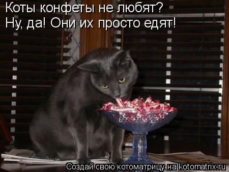 Котоматрица: Коты конфеты не любят? Ну, да! Они их просто едят!