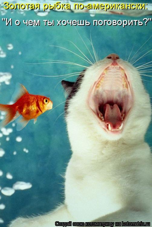 """Котоматрица: Золотая рыбка по-американски: """"И о чем ты хочешь поговорить?"""""""