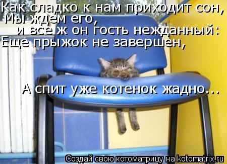 Котоматрица: Как сладко к нам приходит сон, Мы ждем его,  и все ж он гость нежданный: Еще прыжок не завершен, А спит уже котенок жадно...