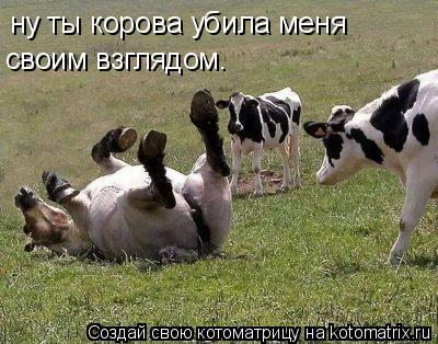 Котоматрица: ну ты корова убила меня  своим взглядом.