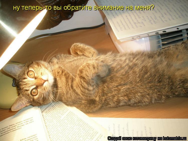 Котоматрица: ну теперь-то вы обратите внимание на меня?