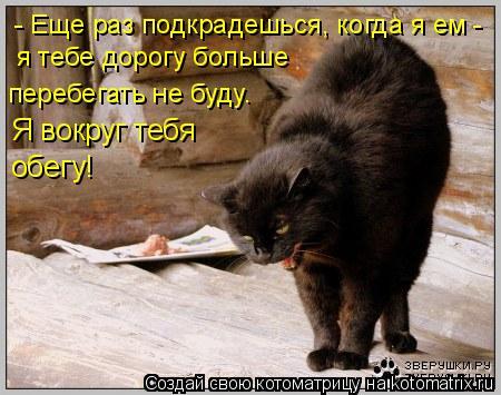 Котоматрица: - Еще раз подкрадешься, когда я ем - я тебе дорогу больше  перебегать не буду. Я вокруг тебя обегу!