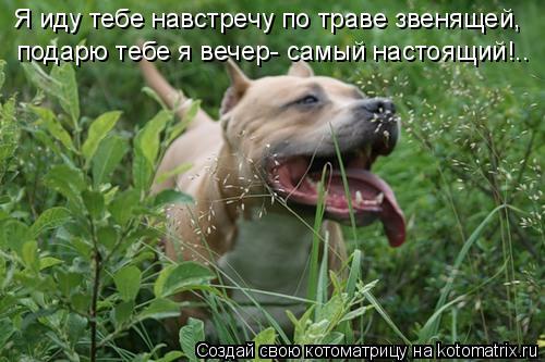 Котоматрица: Я иду тебе навстречу по траве звенящей, подарю тебе я вечер- самый настоящий!..