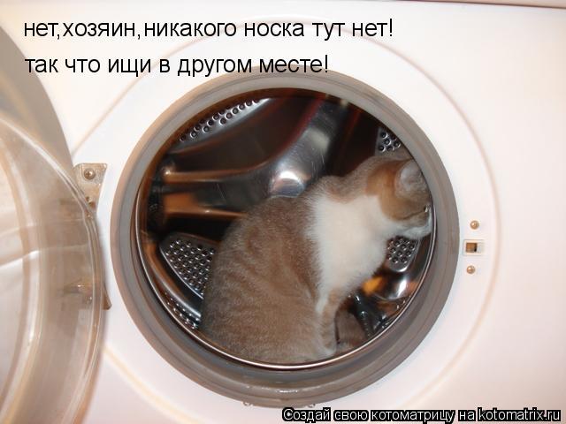 Котоматрица: нет,хозяин,никакого носка тут нет! так что ищи в другом месте!