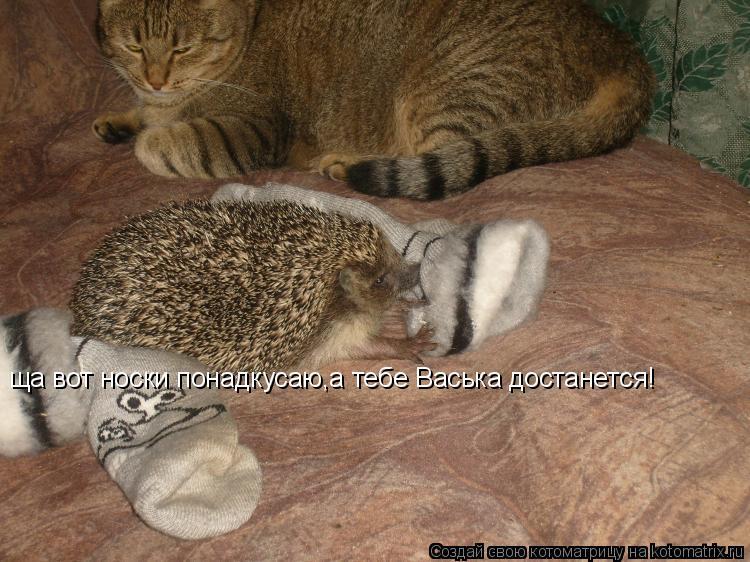 Котоматрица: ща вот носки понадкусаю,а тебе Васька достанется!