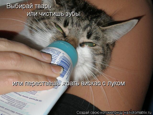 Котоматрица: Выбирай тварь или чистишь зубы или перестаешь жрать вискас с луком