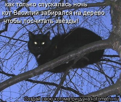 Котоматрица: кот Василий забирался на дерево чтобы посчитать звёзды! как только спускалась ночь