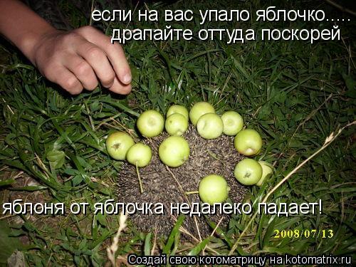 Котоматрица: если на вас упало яблочко..... драпайте оттуда поскорей яблоня от яблочка недалеко падает!