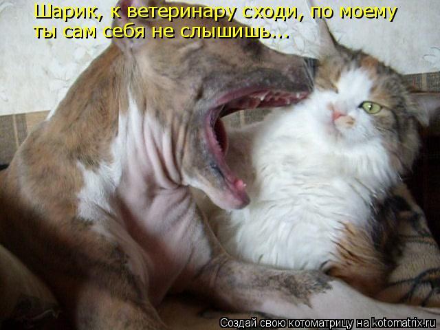 Котоматрица: Шарик, к ветеринару сходи, по моему ты сам себя не слышишь...