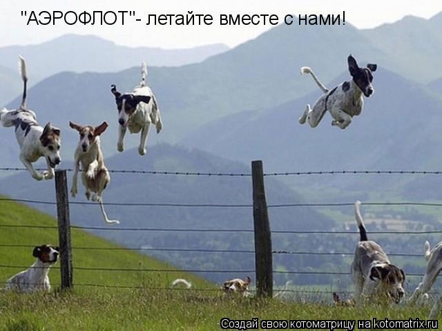 """Котоматрица: """"АЭРОФЛОТ""""- летайте вместе с нами!"""