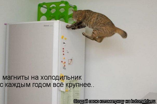 Котоматрица: магниты на холодильник с каждым годом всё крупнее..