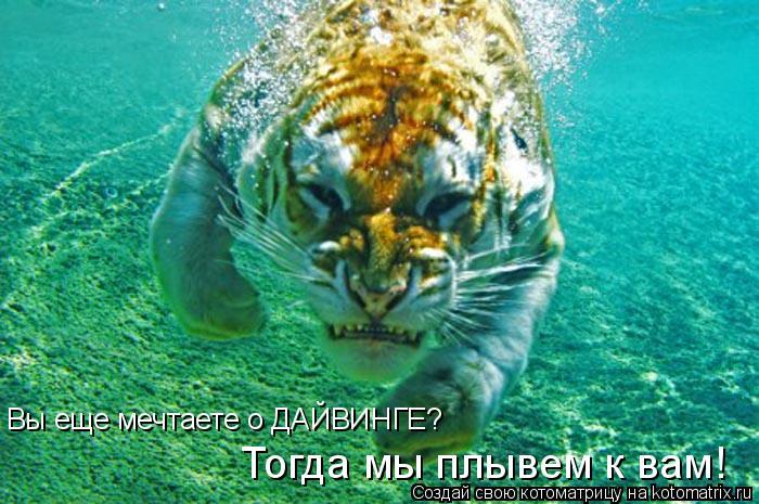 Котоматрица: Вы еще мечтаете о ДАЙВИНГЕ? Тогда мы плывем к вам!