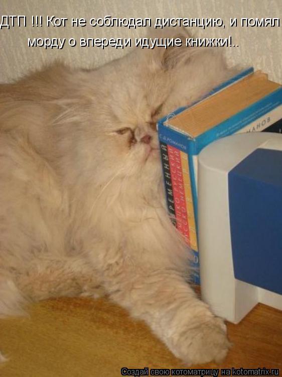 Котоматрица: ДТП !!! Кот не соблюдал дистанцию, и помял морду о впереди идущие книжки!..  морду о впереди идущие книжки!..