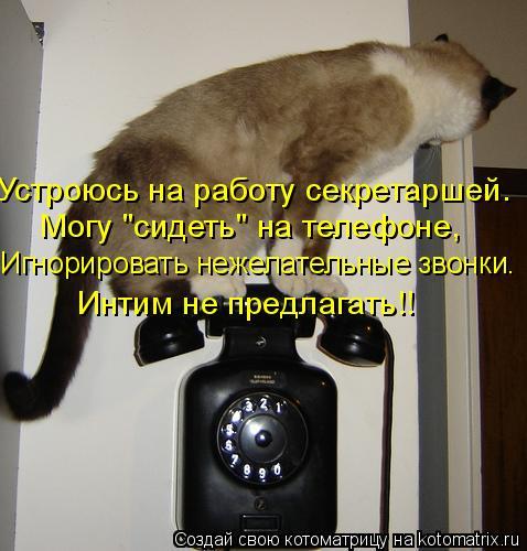 """Котоматрица: Устроюсь на работу секретаршей. Могу """"сидеть"""" на телефоне, Игнорировать нежелательные звонки. Интим не предлагать!!"""
