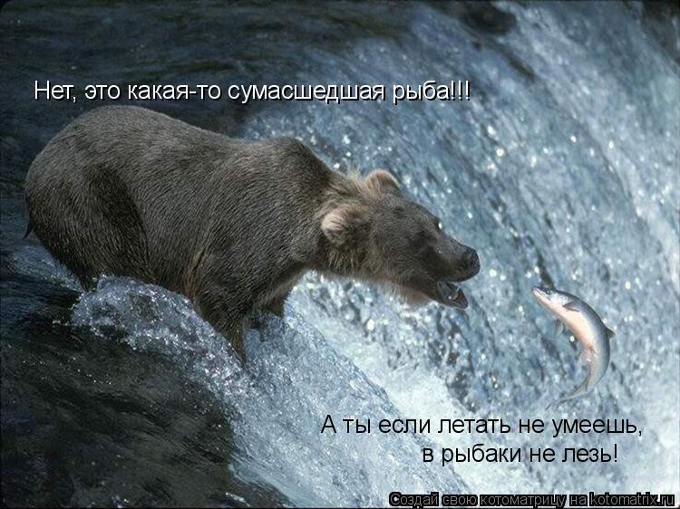 Котоматрица: А ты если летать не умеешь,  в рыбаки не лезь! Нет, это какая-то сумасшедшая рыба!!!