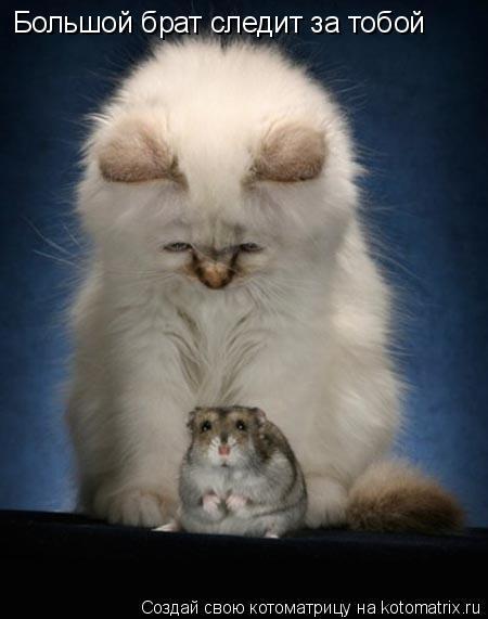 Котоматрица: Большой брат следит за тобой