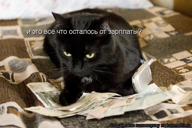 Котоматрица: и это всё что осталось от зарплаты?