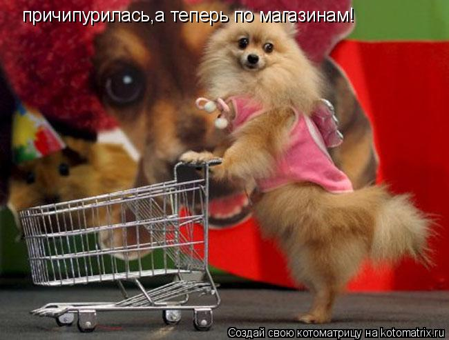 Котоматрица: причипурилась,а теперь по магазинам!