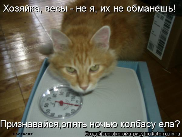 Котоматрица: Хозяйка, весы - не я, их не обманешь! Признавайся,опять ночью колбасу ела?