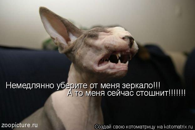 Котоматрица: Немедлянно уберите от меня зеркало!!! А то меня сейчас стошнит!!!!!!!