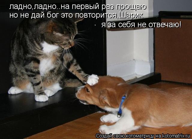 Котоматрица: ладно,ладно..на первый раз прощаю я за себя не отвечаю! но не дай бог это повторится,Шарик