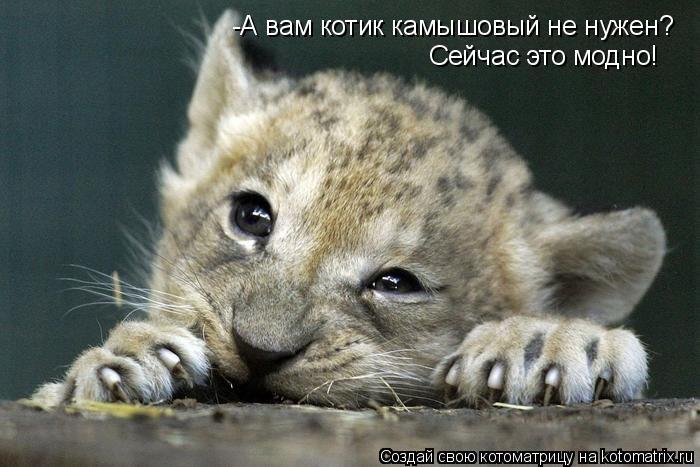 Котоматрица: Сейчас это модно! -А вам котик камышовый не нужен?