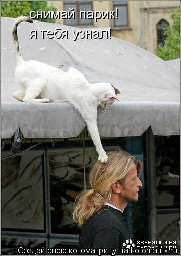 Котоматрица: снимай парик! я тебя узнал!