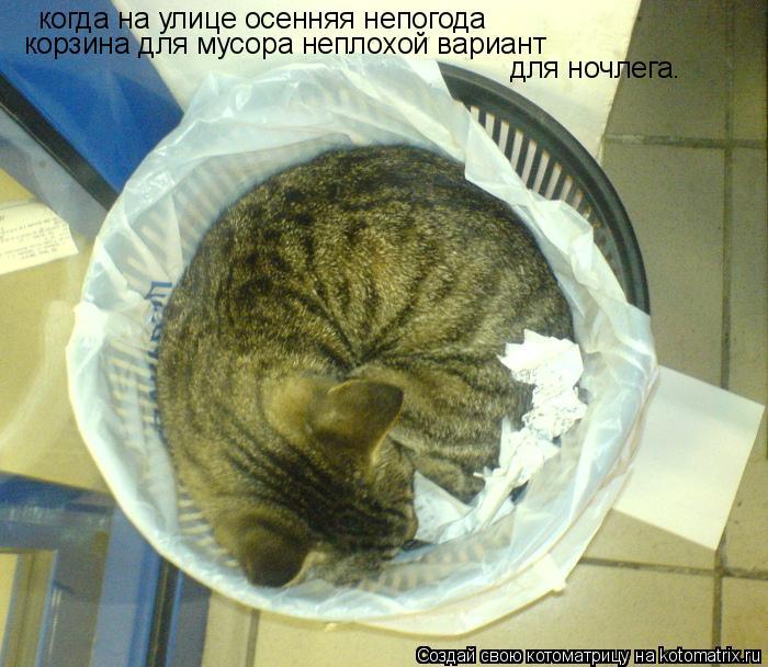Котоматрица: когда на улице осенняя непогода корзина для мусора неплохой вариант для ночлега.