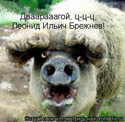 Котоматрица: Дааарааагой, ц-ц-ц, Леонид Ильич Брежнев!