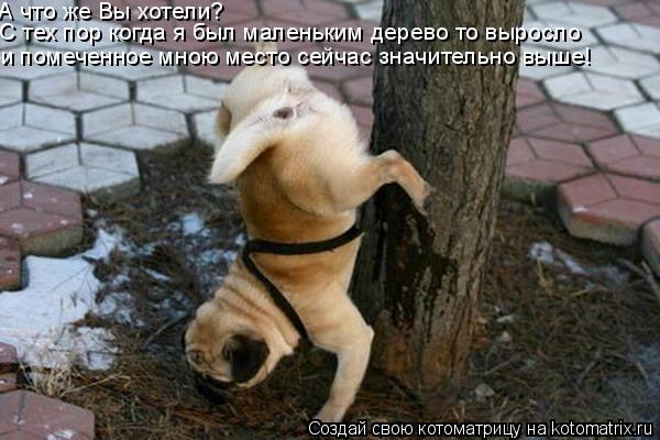 Котоматрица: А что же Вы хотели?  С тех пор когда я был маленьким дерево то выросло и помеченное мною место сейчас значительно выше!