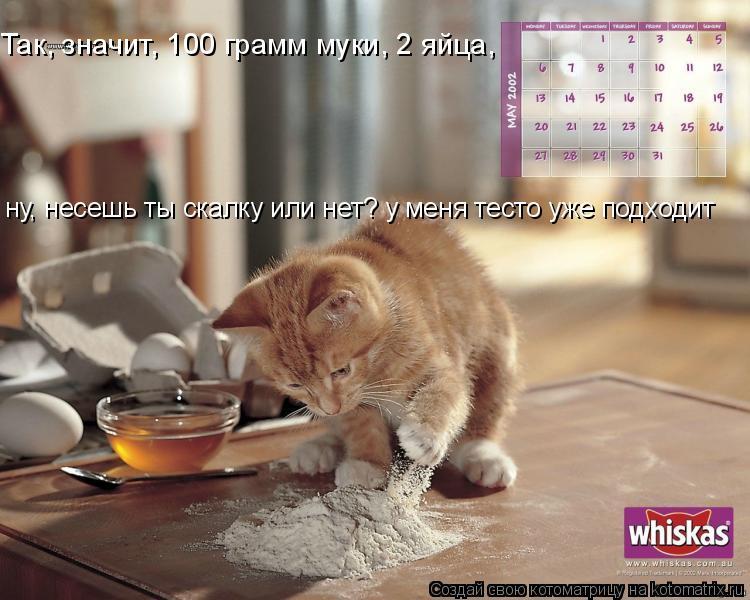 Котоматрица: Так, значит, 100 грамм муки, 2 яйца, ну, несешь ты скалку или нет? у меня тесто уже подходит