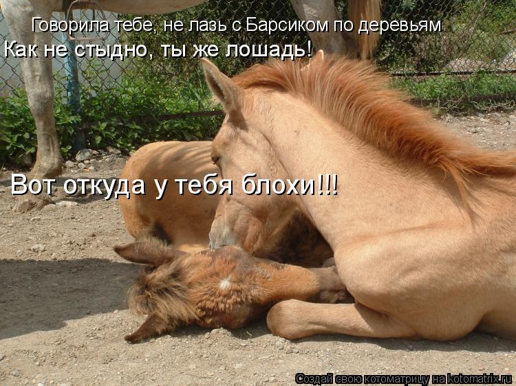 Котоматрица: Говорила тебе, не лазь с Барсиком по деревьям Вот откуда у тебя блохи!!! Как не стыдно, ты же лошадь!