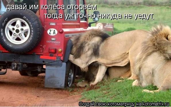 Котоматрица: давай им колёса оторвём тогда уж точно никуда не уедут .