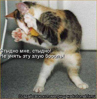 Котоматрица: Стыдно мне, стыдно! Не унять эту злую боооль!