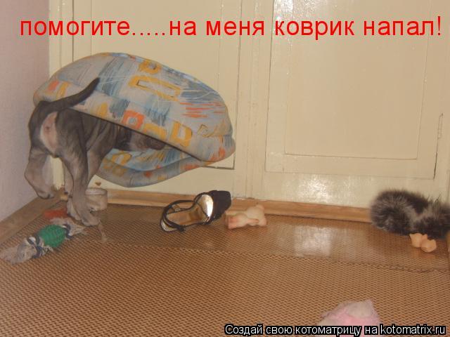 Котоматрица: помогите.....на меня коврик напал!