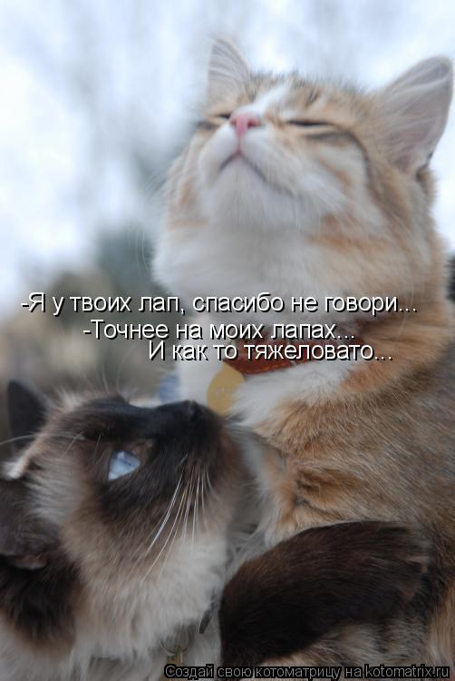 Котоматрица: -Я у твоих лап, спасибо не говори... -Точнее на моих лапах... И как то тяжеловато...