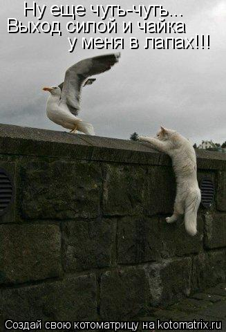 Котоматрица: Ну еще чуть-чуть... Выход силой и чайка  у меня в лапах!!!
