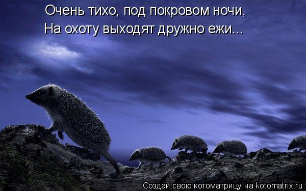 Котоматрица: Очень тихо, под покровом ночи, На охоту выходят дружно ежи...