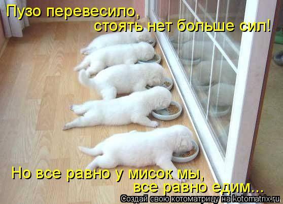 Котоматрица: Но все равно у мисок мы,  все равно едим... Пузо перевесило,  стоять нет больше сил!