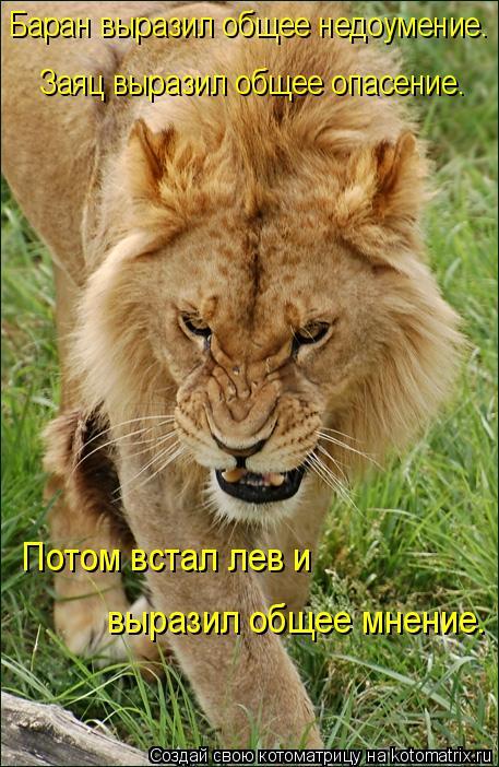 Котоматрица: Заяц выразил общее опасение. Баран выразил общее недоумение. Потом встал лев и  выразил общее мнение.