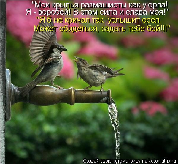 """Котоматрица: """"Мои крылья размашисты как у орла! Я - воробей! В этом сила и слава моя!"""" """"Я б не кричал так, услышит орел, Может обидеться, задать тебе бой!!!"""""""