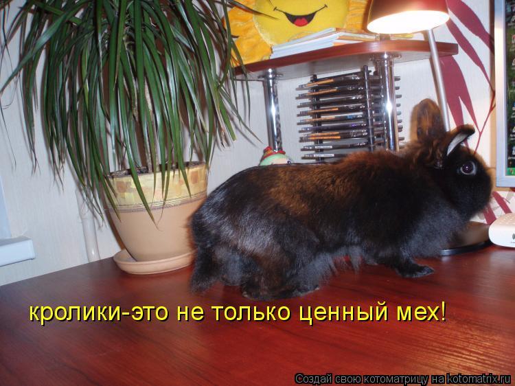Котоматрица: кролики-это не только ценный мех!