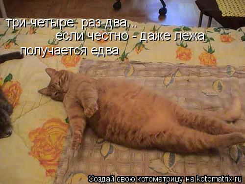 Котоматрица: три-четыре, раз-два... если честно - даже лежа  получается едва