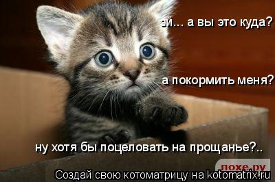 Котоматрица: эй... а вы это куда? а покормить меня? ну хотя бы поцеловать на прощанье?..