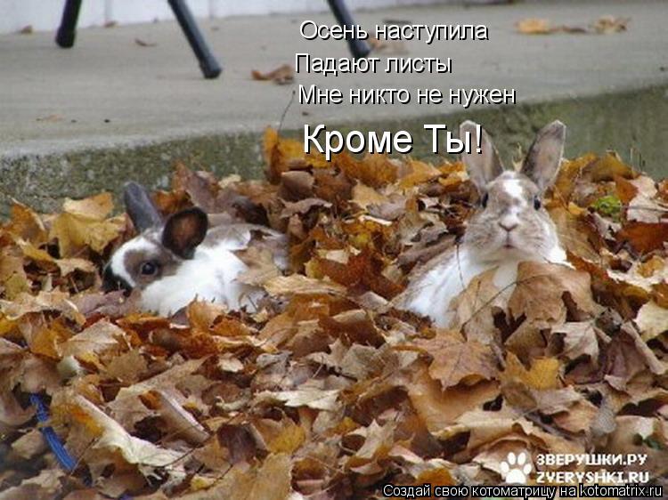 Котоматрица: Осень наступила Падают листы Мне никто не нужен Кроме Ты!
