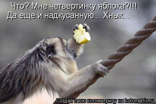 Котоматрица: Что? Мне четвертинку яблока?!!! Да еще и надкусанную... Хнык...
